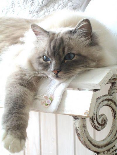 Such a pretty kitty . .