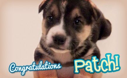 """Meet our Pet of the Month Winner Patch, who belongs to Wambie girl Karina. She says, """"Patch is very sweet and loves to play with her sisters. :)"""