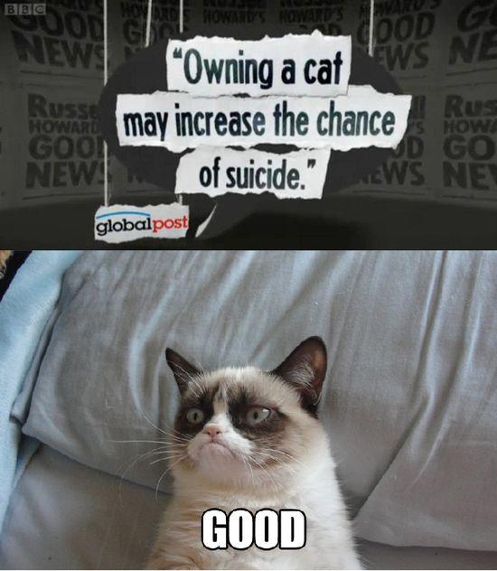 i love this cat,