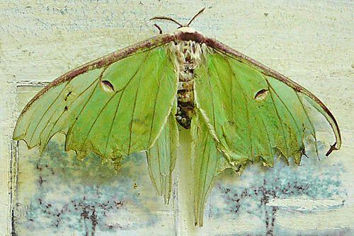 Aqua Lime Green