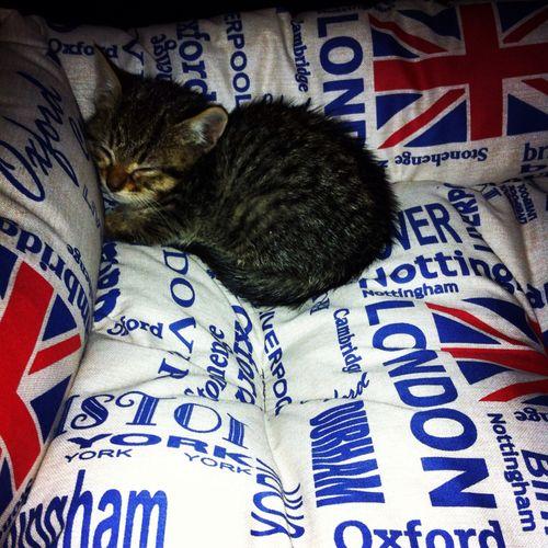 cute cat, little cat, #cats #cute