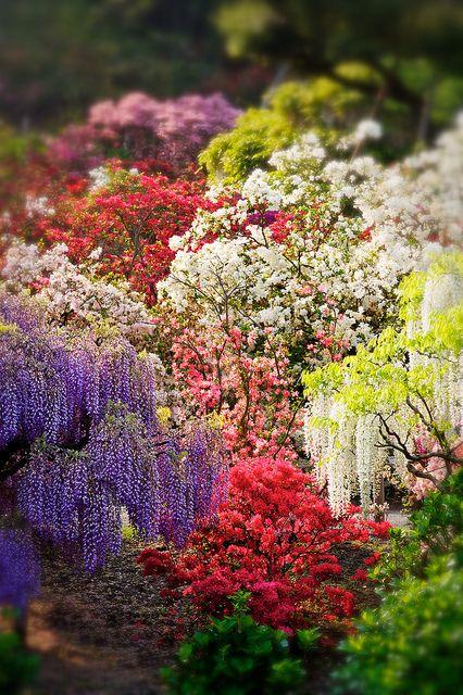Asikaga Flower Park,Tochigi, Japan