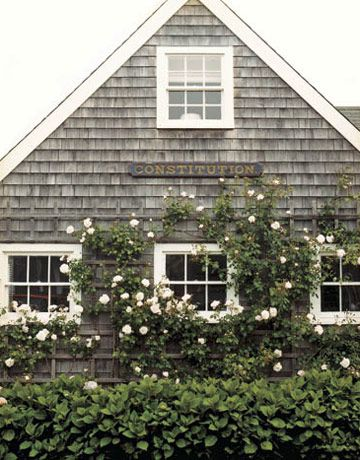 shingles with new dawn roses