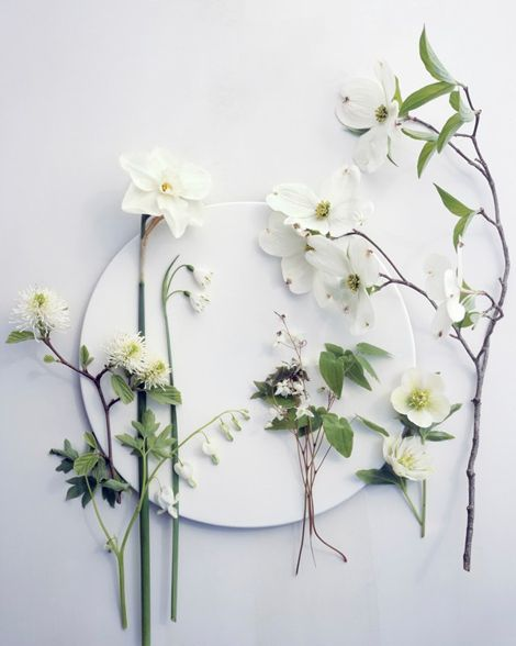 Dogwood, daffodil, and a collection of white specimens