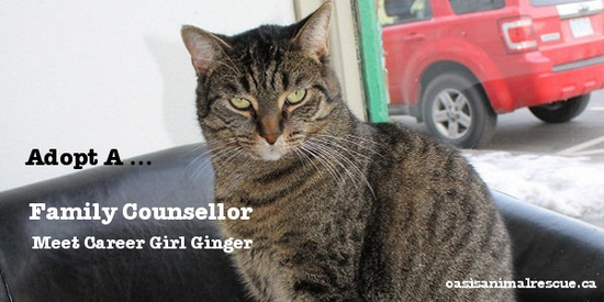 Every family could use a counsellor. Adopt Ginger, relieve the stress! oasisanimalrescue.ca