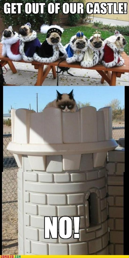 grumpy cat in a castle