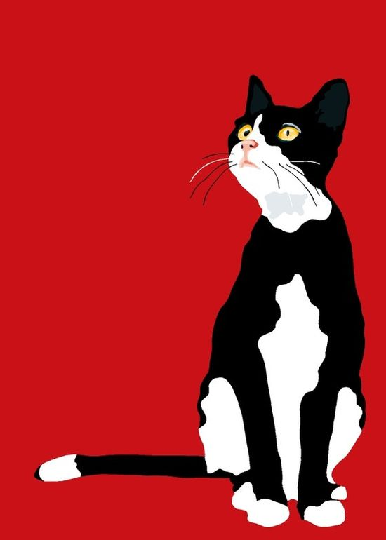 LOVE,  LOVE,  LOVE  THIS CAT WITH A RED BACKGROUND.........ccp