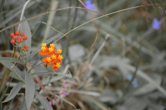 Wordless Wednesday - Flower Field
