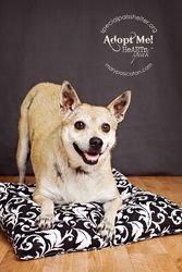 Lucy is an adoptable Terrier Dog in Houston, TX. Lucy was on death row when we found her at the pound trembling in a corner.  She's been in a shelter since 2009...
