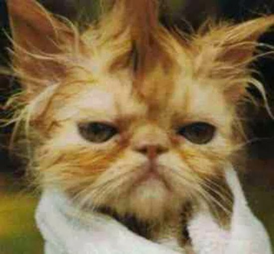 funny cat #funny kitten photos #funny school pictures #funny spongebob photos #funny dog clips #farts