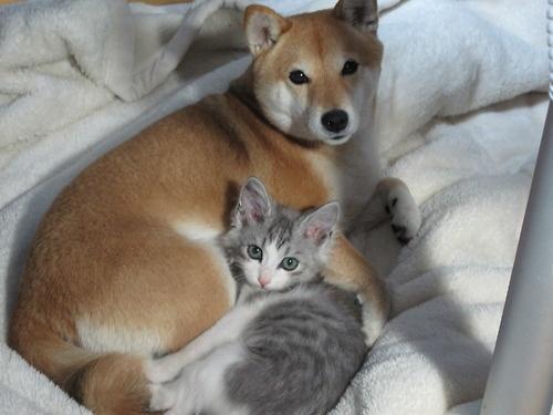 Pets that have pets