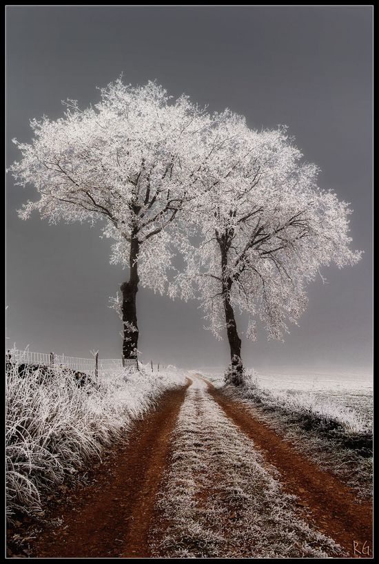 Frost covered trees look like they live in another world.