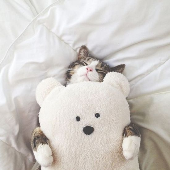 kitten with her teddy bear