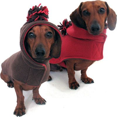 Hoodie Dachsunds!