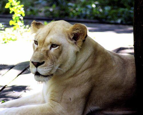 Big Cats - wild-animals Photo