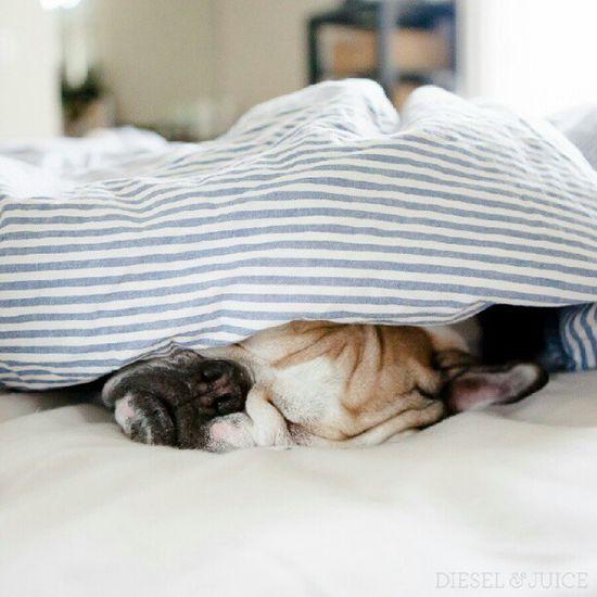 snug as a bulldog!