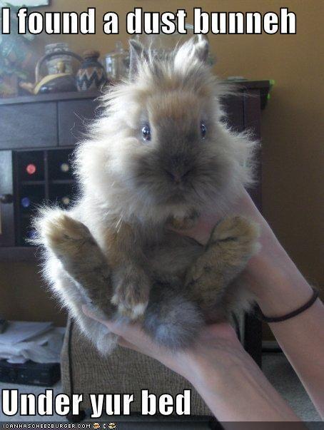 #bunnies #rabbits #animals #pets