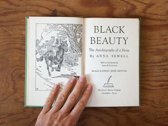 Black Beauty illustrated // blue handmade journal // by ericmbaral