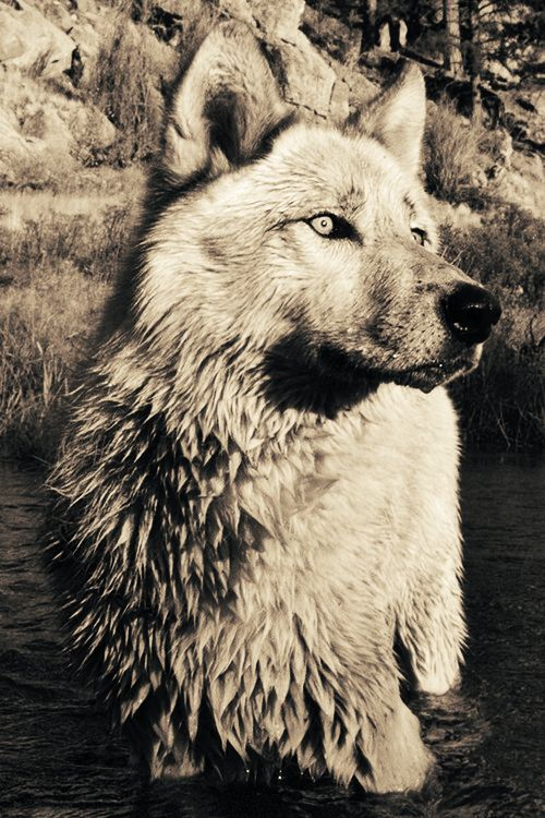 be wolf