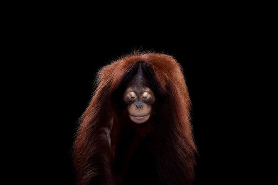 Studio Portraits of Wild Animals by Brad Wilson
