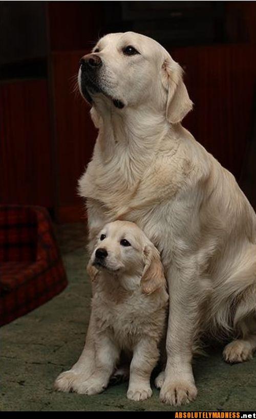 Mama & pup