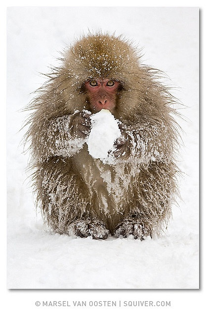~~ Snow ball ~~