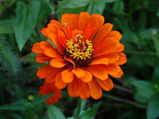 Beauty Flower~