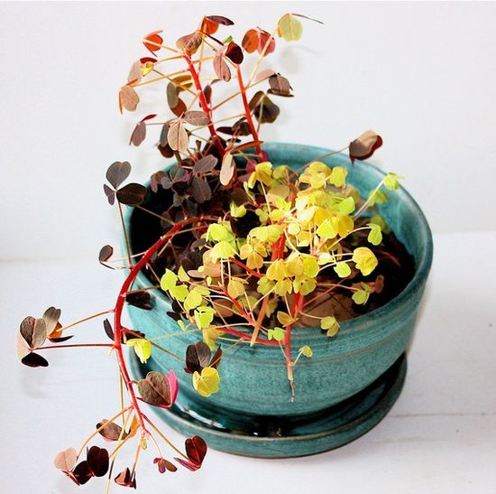 beautiful house plants