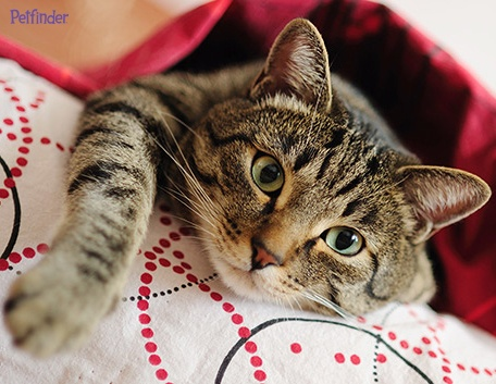Do you know how to take great cat pictures? Click ahead for our top 6 tips to get great photos! Repin to share the beauty.