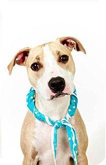 In New York? Adopt Te'Sa! Such a cutie. www.adoptapet.com...