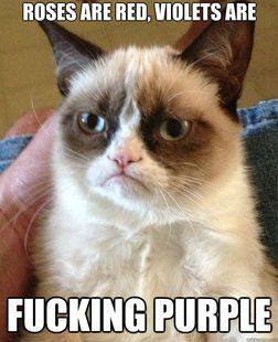 Oh how I love you grumpy cat