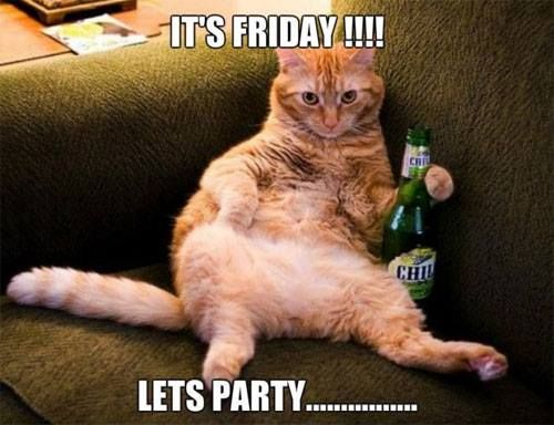 #funny #cats #funny #cat #lol #humor #hilarious #cute #kitty #cat #feline #party #friday