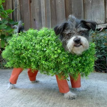"Chia Pet Dog Costume (I can't believe I actually have a ""need"" to pin this)"