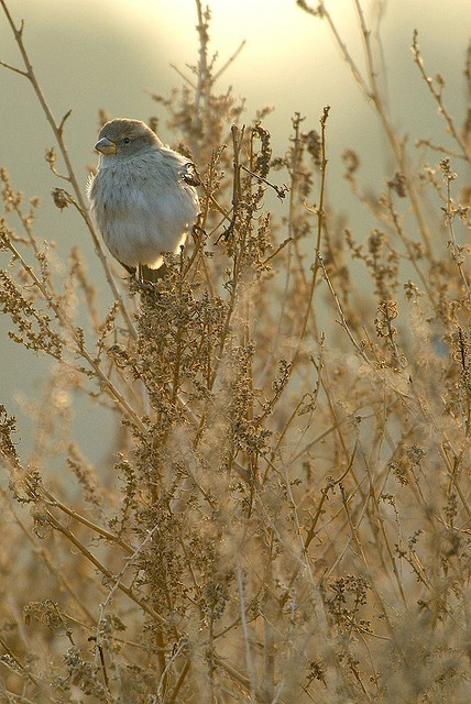 Bird in field