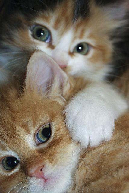 Close up kitties