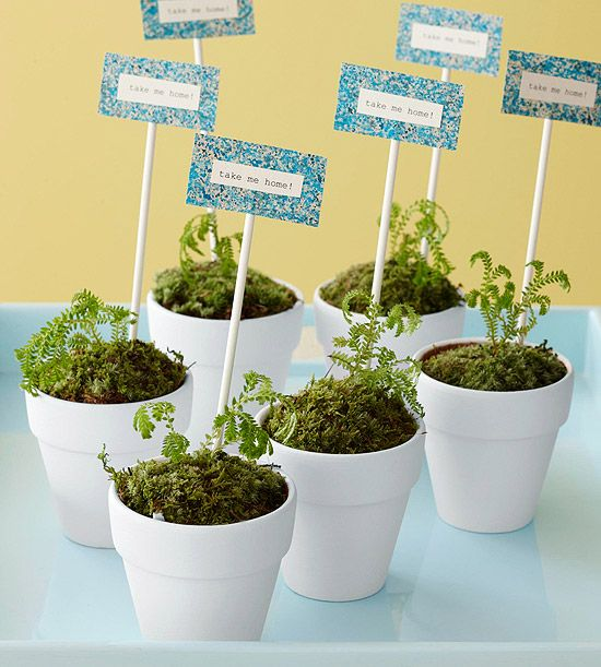 a great idea for a garden party - plant party favors!