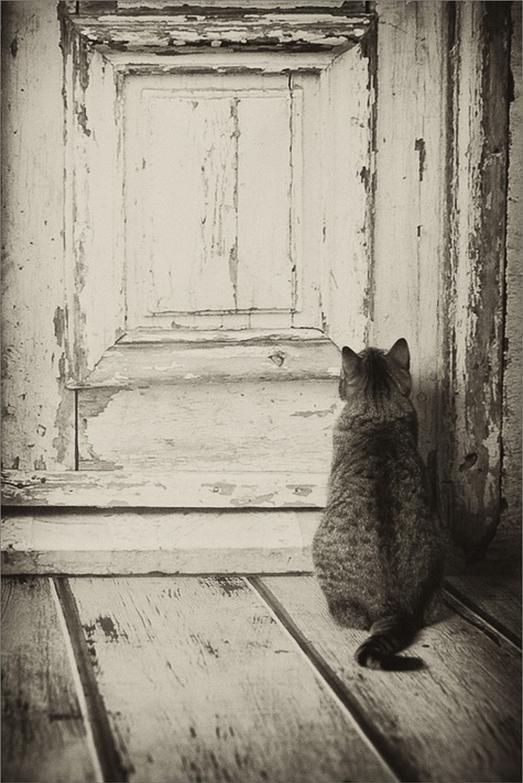 Let me in.... #koty #cats