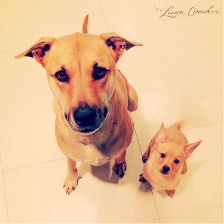 Lauren Conrad's dogs ?