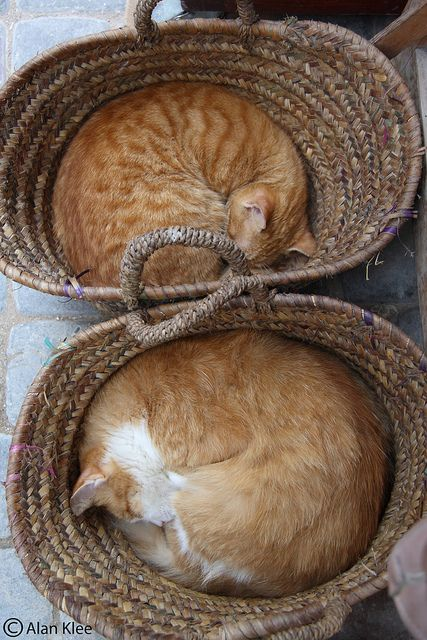 two cats, two baskets.