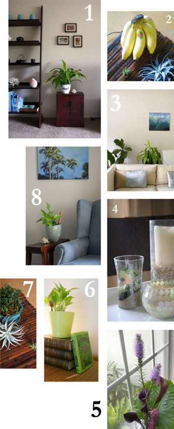 The Rainforest Garden: Interior Design with Plants