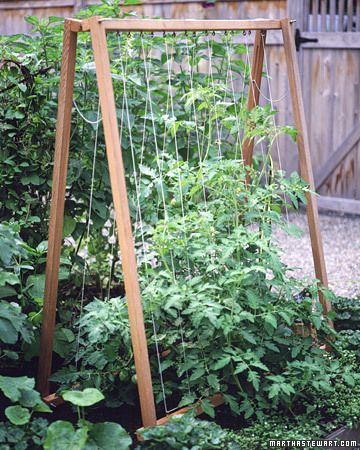 Good frame - using twine so less wood needed  A-Frame    A structure that allows you to grow more than one variety of tomato or cucumber side by side, but its compact design doesn't take up much space in the garden.