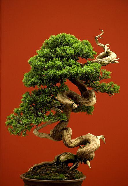 Bonsai (by penelope mary)