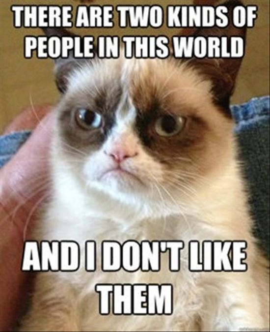 Best Of Grumpy Cat – 35 Pics