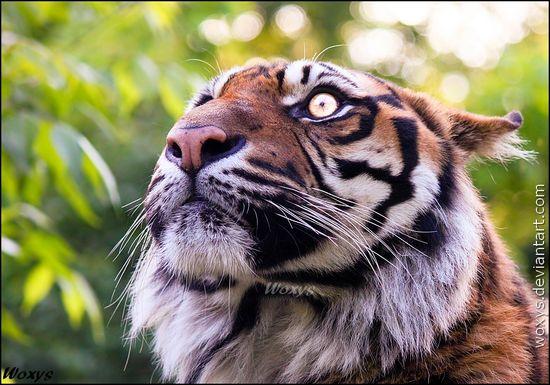 Photography / Animals, Plants & Nature / Wild Animals