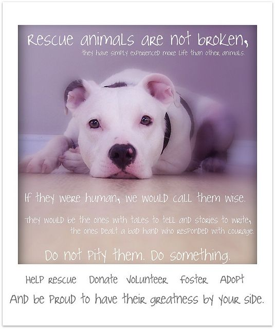 ? do something for animals today...
