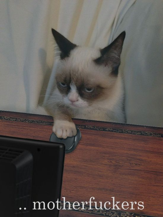 Grumpy cat is ready what you say...