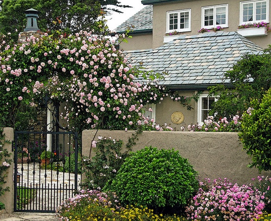 rose arbor over the gate