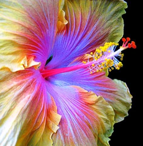 Gorgeous Flower, Beautiful Lighting
