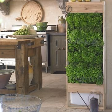 Keep herbs growing in your kitchens.