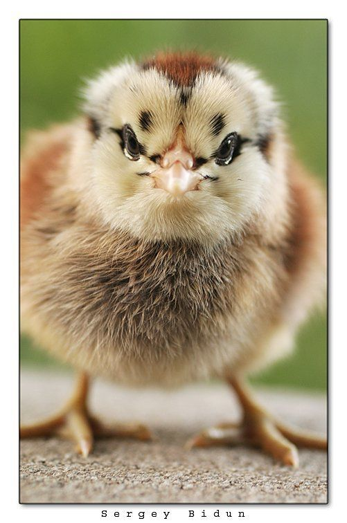 Baby Animals 2/Baby Animals (3).jpg